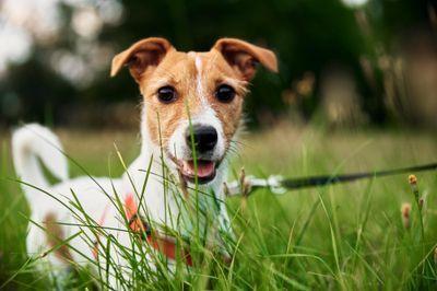 Você tem animais de estimação? Vamos te dar 5 dicas para escolher o imóvel ideal