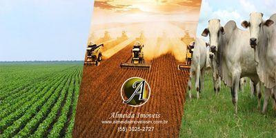 Confira em nosso canal algumas áreas rurais em vídeo.