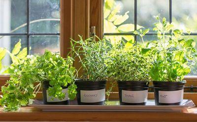Confira dicas para fazer uma horta em apartamento
