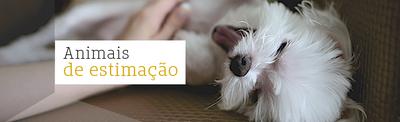 Animais de estimação: qual combina melhor com o seu estilo de vida?