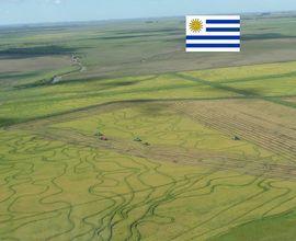 area-rural-santana-do-livramento-imagem