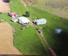 fazenda-pinheiro-machado-imagem