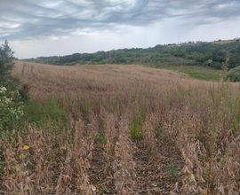 area-rural-jari-imagem