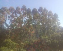 area-rural-sinimbu-imagem