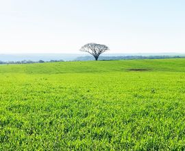 fazenda-manoel-viana-imagem