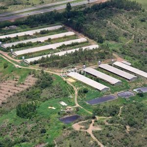 Fazenda Granja de Aves & Suínos