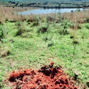 Área 150 hectares terra Vermelha