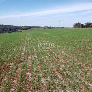 Área  para produção de grãos. Região Nordeste do RS.
