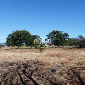 394 hectares em Oliveira dos Brejinhos