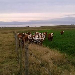 Fazenda de 592 hectares a venda no Rio Grande do Sul!!