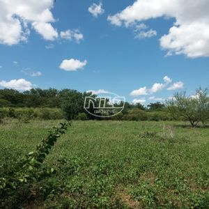 2000 hectares em Oliveira dos Brejinhos