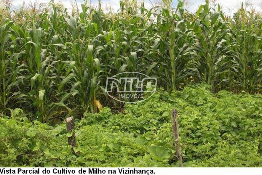 775 hectares em Ibotirama