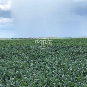 3 mil hectares em Loreto