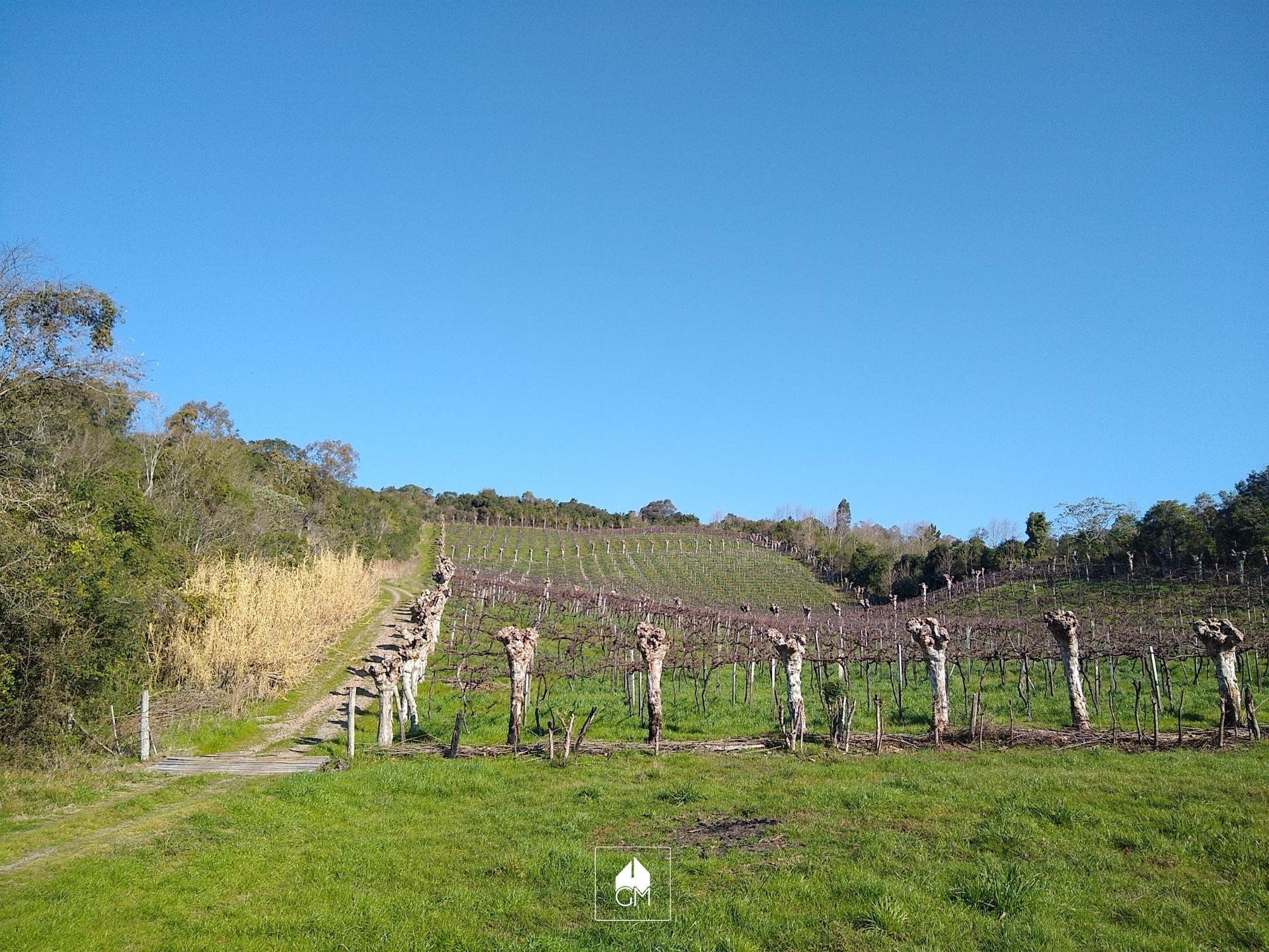 Terreno comercial à venda  no Zona Rural - Garibaldi, RS. Imóveis