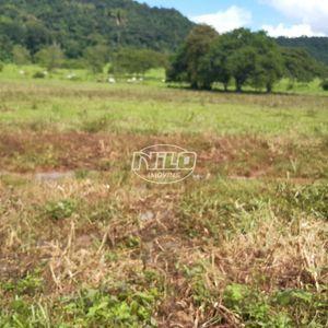Área acima de 300ha em Mato Grosso, Guarantã do Norte, Rural .