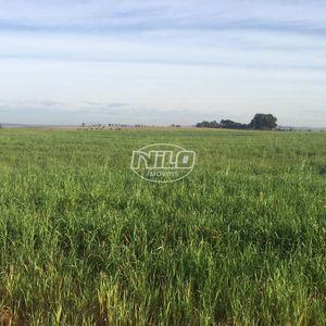 440 hectares em São Vicente do Sul