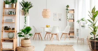 5 plantas que decoram e ajudam a afastar os insetos