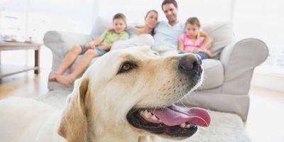 Animais em condomínio, daremos dicas de como evitar processos.