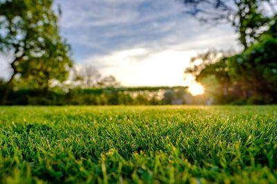 Como cuidar do seu gramado