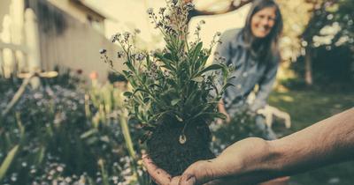 5 plantas perfumadas para você ter em casa