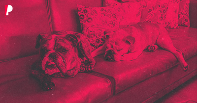 Cinco dicas para um lar bonito e com pets