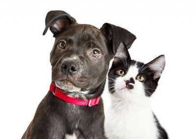 Gato ou cachorro para apartamento? Entenda as diferenças!