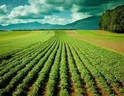 fazenda-jari-imagem