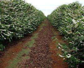 fazenda-capelinha-imagem