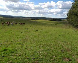 fazenda-encruzilhada-do-sul-imagem