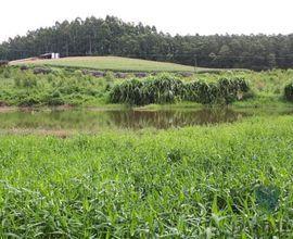 area-rural-salvador-do-sul-imagem