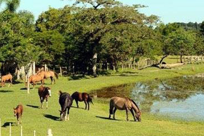 Casa de sítio ou fazenda. Como é viver no campo? - Relato
