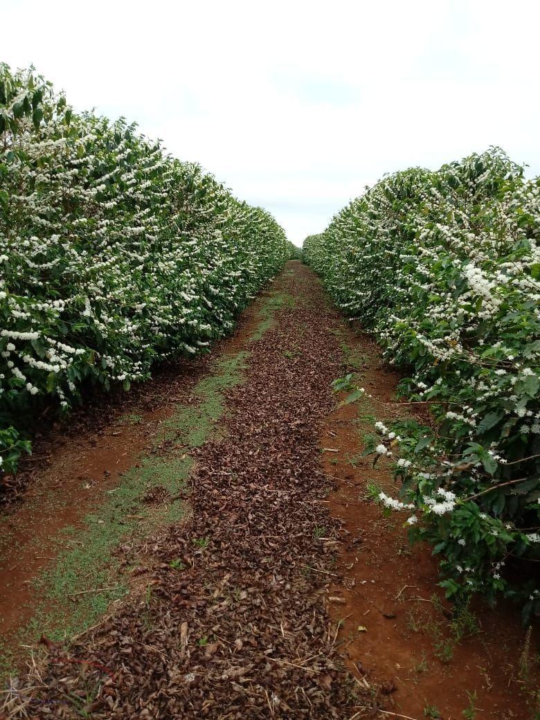 Fazenda/sítio/chácara/haras à venda  no Parque Industrial Cafezal - Rolândia, PR. Imóveis