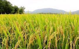 fazenda-sao-vicente-do-sul-imagem