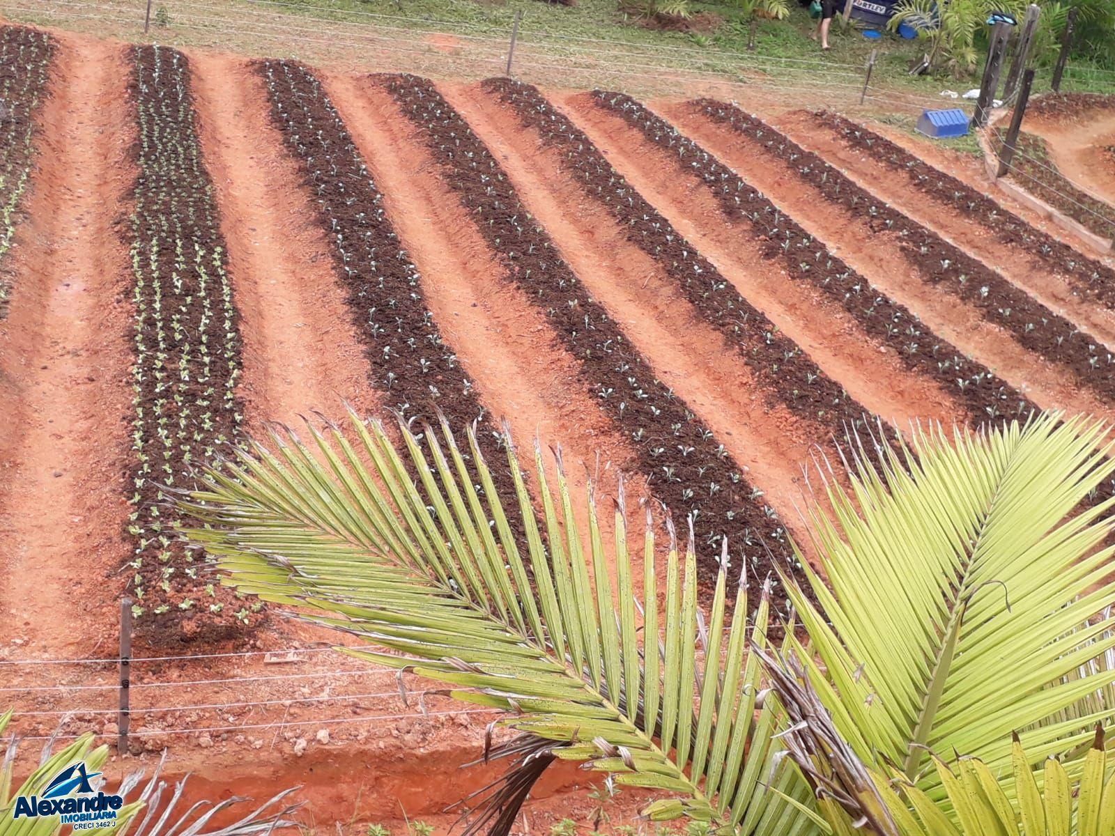 Fazenda/sítio/chácara/haras à venda  no Três Rios do Norte - Jaraguá do Sul, SC. Imóveis