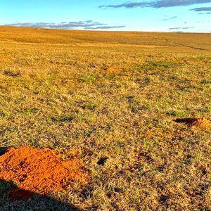 500 hectares a venda em Alegrete, para pecuária e lavoura