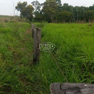 Fazenda no município de Guaraí - TO