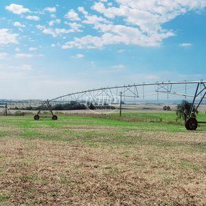 Área 532 hectares, com 320 hectares irrigados com de Pivô.