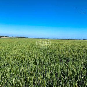 Fazenda bem localizada em Camaquã - RS