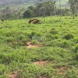 Fazenda De Pecuária - Novo Progresso/PA