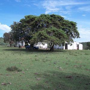 Área para pecuária.