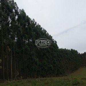 100 hectares em Cacequi
