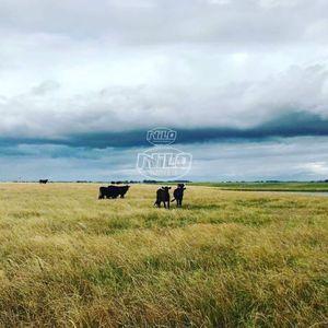 1100 hectares em Bagé