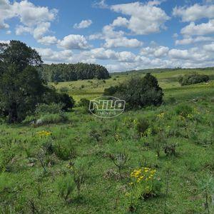 Fazenda de aptidão mista. Pecuária, reflorestamento, fruticultura e partes para agricultura no RS
