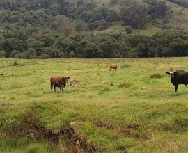 fazenda-uruguaiana-imagem