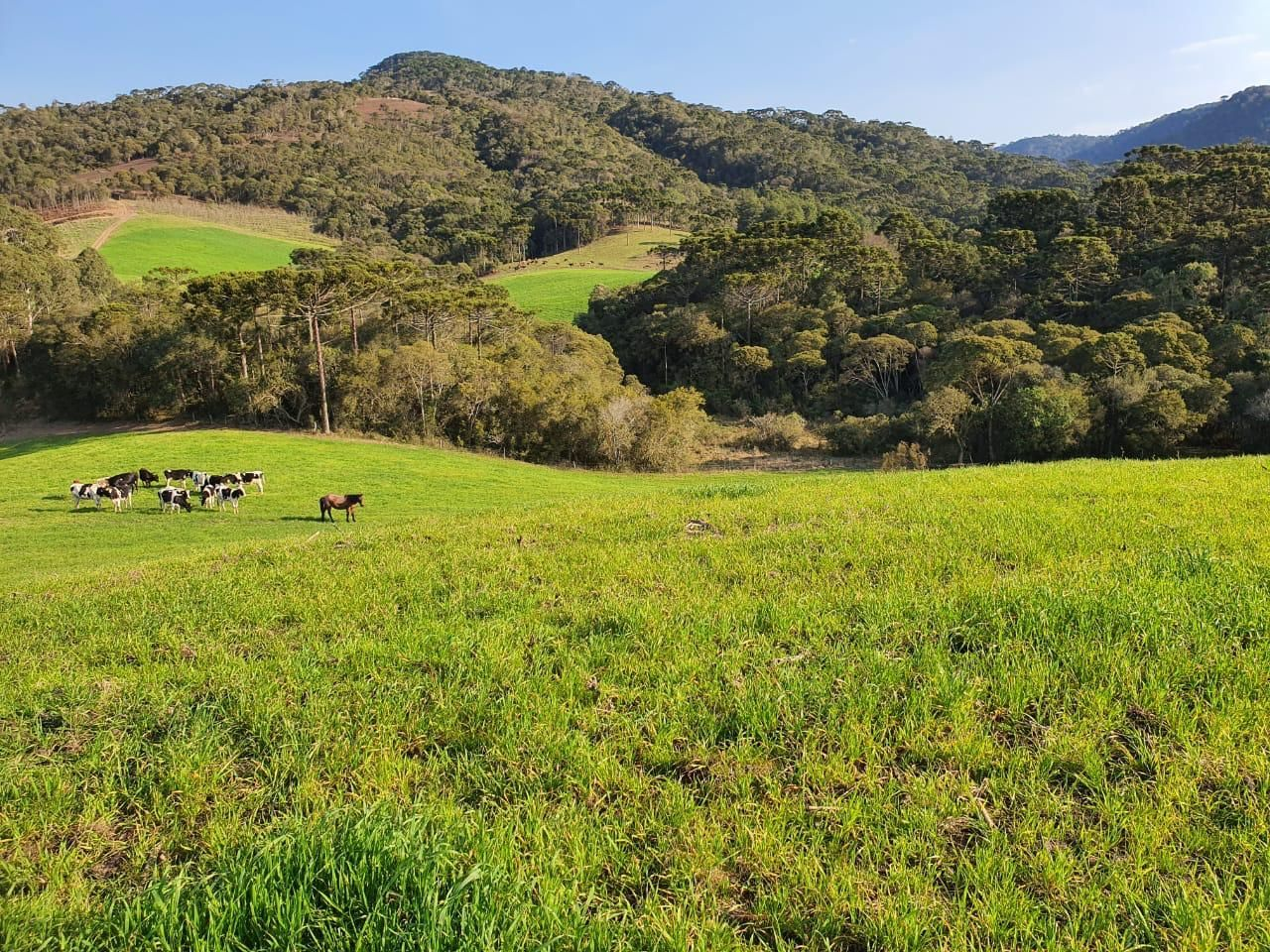 Fazenda/sítio/chácara/haras à venda  no Zona Rural - Urubici, SC. Imóveis