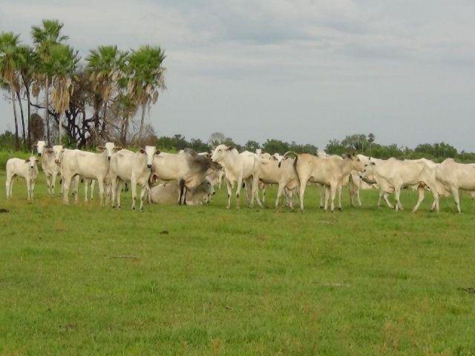 Terreno comercial à venda  no Zona Rural - Cáceres, MT. Imóveis