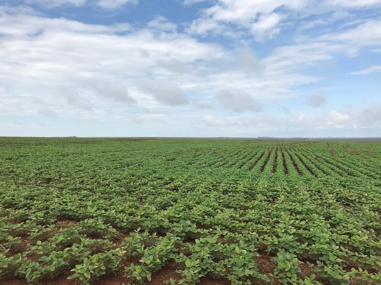 Terreno comercial à venda  no Zona Rural - Sapezal, MT. Imóveis