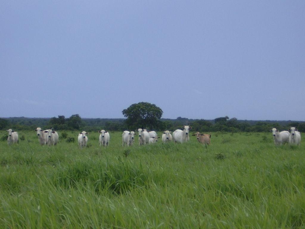 Terreno comercial à venda  no Zona Rural - São Félix do Araguaia, MT. Imóveis