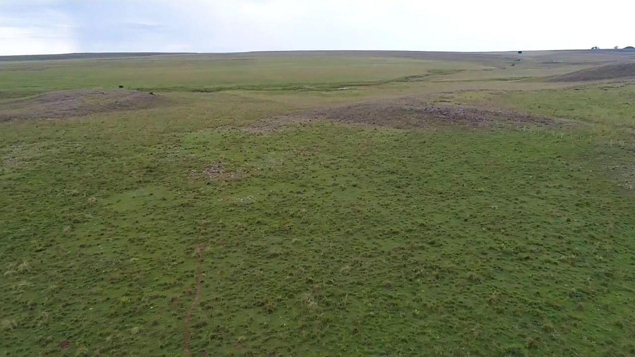 Fazenda para pecuária em Alegrete - 190 hectares
