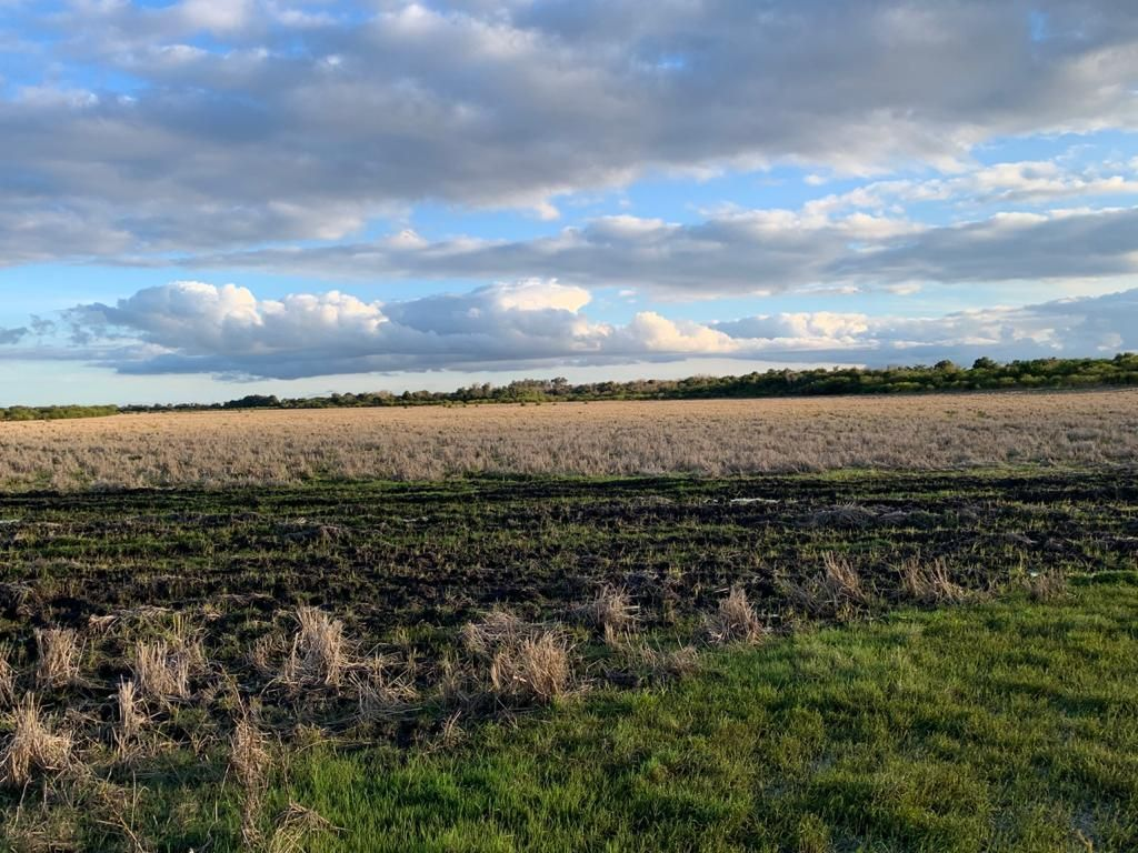 450 hectares de arroz e pecuária em Quarai.